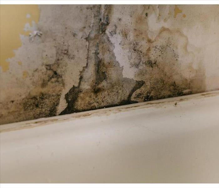 Mold growth on a wall due to humidity